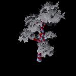 SM_TR_Tree_I_01